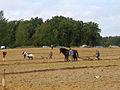 04-09-12-fahrenwalde-schaupfluegen-by-RalfR-13.jpg