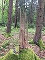 04-Baumstumpf-spezial.jpg