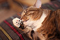 090711 Washing cat.jpg