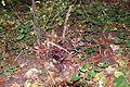 12-10-21 Dreieich Pilze 42.jpg