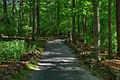 16-12-109, tree trail - panoramio.jpg