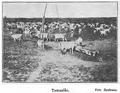 1910 Turmă de vite.PNG