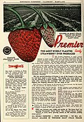 1946 catalog of fruits (1946) (16644612996).jpg