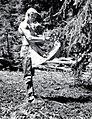 1955. Insect checker R. Rensil clipping 15 inch twigs for examination of western spruce budworm that survived DDT spray application. Western spruce budworm control project. Ochoco control unit, Oregon. (32932668721).jpg