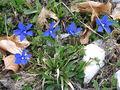 2005-05-11 - 14-03 Monte Baldo 05.JPG