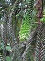 20100620 Plantentuin Meise (0060).jpg