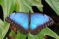 2011-04-25-lepidoptera-hunawihr-6.jpg