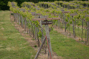 Louisa County, Virginia - Cooper Vineyards in Louisa is the first winery on the East Coast and the second in the country to be awarded the fourth and highest, Platinum certification by Leadership in Energy and Environmental Design (LEED)