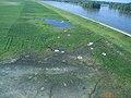 2011 Flood (5959170886).jpg