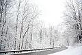2011 snow february6 (5430880310).jpg