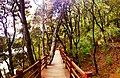 20130531普达措国家公园碧塔海人行步道4 - panoramio.jpg
