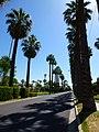 2013 - View East, E Palm Lane - panoramio.jpg