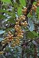 2014 Borneo Luyten-De-Hauwere-Plant-03.jpg