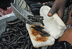 Vitellaria - Preparing a sandwich with fried shea tree caterpillars at the Boromo bus station in Burkina Faso.