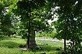 71-237-5001 Balakleya park SAM 8782.jpg