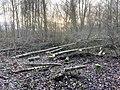 9847.Roege.Bos.DeHeld.Dunnen.BomenKap.Park.Bos.Woud.Herfst.jpg