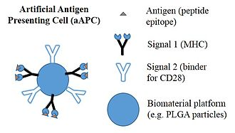 Artificial antigen presenting cells - A general schematic of an artificial antigen presenting cell (aAPC). aAPCs are made by conjugating both T cell stimulatory Signals to material platforms.