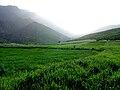 AZNA - Spring View.jpg
