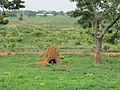 A Termite Mound in an Open Field.jpg