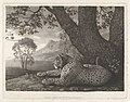 A Tyger (A Recumbent Leopard by a Tree) MET DP833339.jpg