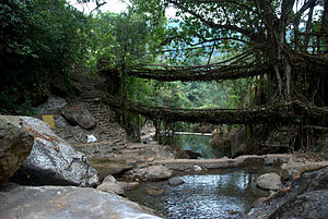 A double decker living bridge in Meghalaya, December 2011.jpg