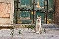 A feral cat in Palermo-1.jpg