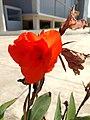 A flower8.jpg