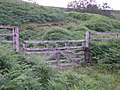 A gate and rough track - geograph.org.uk - 298408.jpg