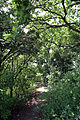 A path with kissing gate at Woodland Trust wood Theydon Bois Essex England.JPG