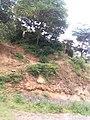 A section of vegetation along Machakos to Kangundo Road.jpg