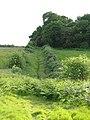 A wall of bracken - geograph.org.uk - 1344236.jpg