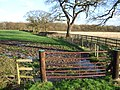 Across the fields - geograph.org.uk - 319980.jpg