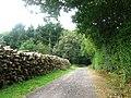 Adisham's wood, Kent, UK - panoramio.jpg
