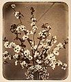 Adolphe Braun - Floral Still Life - Google Art Project.jpg