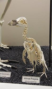 Seabird - Wikipedia