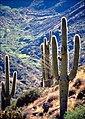 Agfr desert.jpg