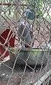 Agodi Garden Ibadan37.jpg