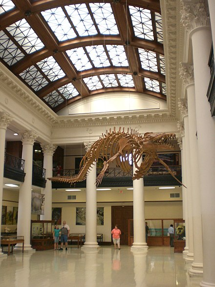 The Alabama Museum of Natural History at Smith Hall - University of Alabama