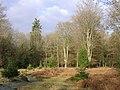Aldridgehill Inclosure, New Forest - geograph.org.uk - 92407.jpg