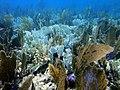 Alghe in fondo al mare.jpg