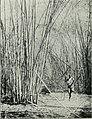 Am Tendaguru - Leben und Wirken einer deutschen Forschungsexpedition zur Ausgrabung vorweltlicher Riesensaurier in Deutsch-Ostafrika (1912) (18138807806).jpg