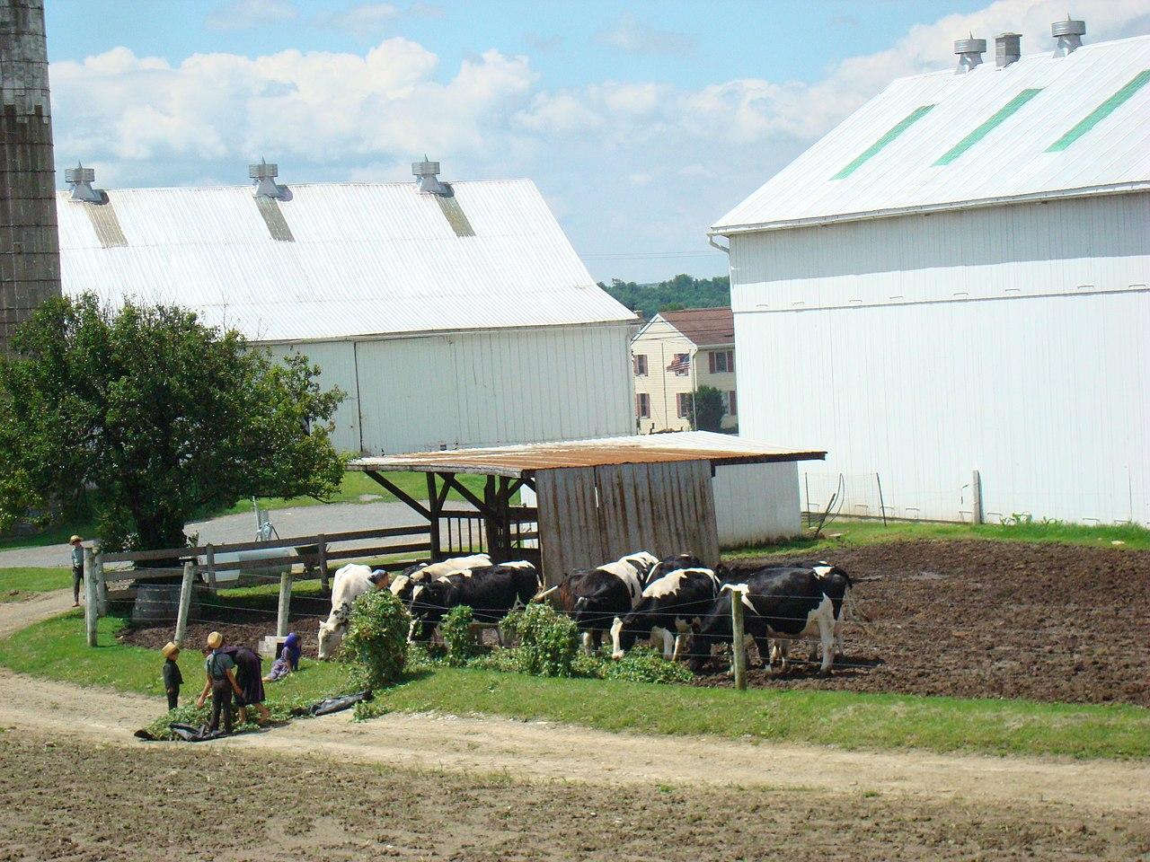 Lancaster Pa Amish Bus Tours
