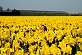 Anão Perdido no meio das Flores - panoramio.jpg
