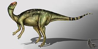 2002 in paleontology - Anabisetia saldiviai