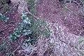 Anaga Mountains(19).jpg