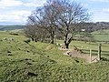 Ancient Hedge Line and Footpath - geograph.org.uk - 354080.jpg