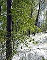 Andechs, Rothenfelder Forst HB-05.jpg
