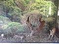 Animais silvestre da região - taxidermia.jpg