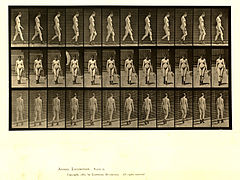 Animal locomotion. Plate 22 (Boston Public Library).jpg