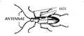 Antennae (PSF).png